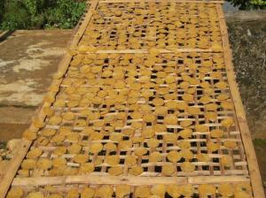 Jagung Sanggau Ledo