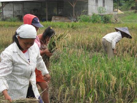 Sensus Pertanian Diharapkan Mampu Memberikan Dampak Yang Kesejahteraan Masyarakat